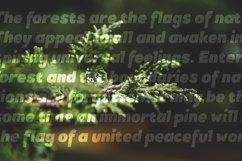 Pines Black & Pines Black Italic Product Image 2