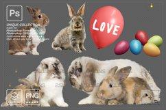 Photoshop overlay Easter bunny overlay Product Image 6