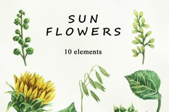 Sunflower Watercolor clipart. Separate elements Product Image 2