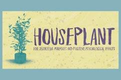 Houseplant Product Image 1
