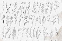 Line art botanical illustrations Product Image 6