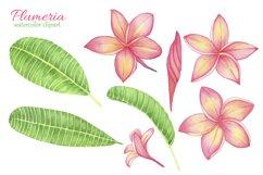 Tropical Flower Plumeria Frangipani. Watercolor clipart Product Image 2
