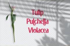 Pulchella Bold Serif Font | New Updates Product Image 4