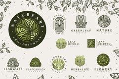 Line Leaf Logo Design / Leaf Svg / Plant Svg Product Image 2