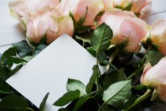 Gentle Roses Stock Photos Pack Product Image 3