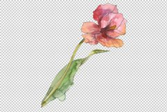 Assorted tulip bouquet Watercolor png Product Image 3