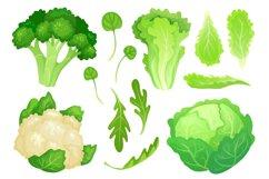 Cartoon cabbages. Fresh lettuce leaves, vegetarian diet sala Product Image 1