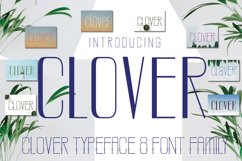 CLOVER FAMILY Product Image 4