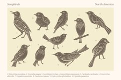 Songbirds graphic collection Product Image 2