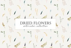 Dried Flowers. Watercolor Collection. Patterns and Cliparts Product Image 1