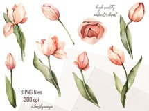 Watercolor clipart coral pink Tulips. Floral digital set PNG Product Image 2