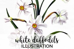 Daffodil Clipart White Flowers Vintage Product Image 1