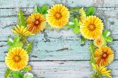 Summer Dandelion Clipart Watercolor  Product Image 6