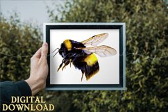 Bumble Bee Clipart Watercolor SVG PNG PDF JPEG Product Image 5