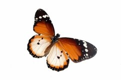 11 Butterfly Collection on White Background Lepidoptera Product Image 6