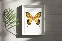 34 Hand-Painted Watercolor Butterflies Product Image 5