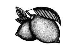 Lemons engraving style illustration. Product Image 3