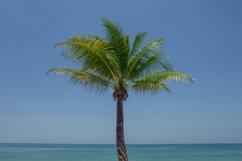 Palm tree Product Image 1