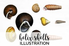 Shells Clipart Helix Product Image 1