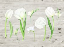 Watercolor white tulips and freesia clipart Product Image 3