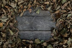 Autumn background flat lay, autumn dry leaves blank space Product Image 1