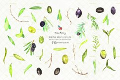 Watercolor Olive Leaves Clipart| Drawberry CP053 Product Image 2