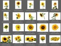 40 Sunflower Photo Overlays Product Image 4