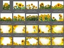 40 Sunflower Photo Overlays Product Image 5