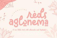 Reds Aglonema Product Image 1