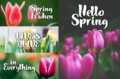 Hello Spring Product Image 2