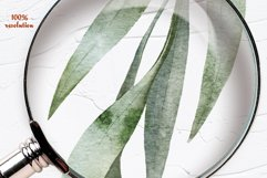 Eucalyptus Willow Watercolor Clipart Product Image 4