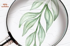 Eucalyptus Willow Watercolor Clipart Product Image 3