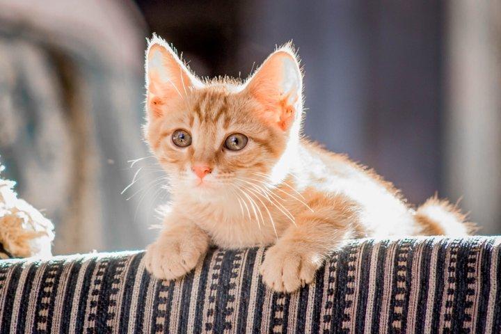Close Up Photo of Orange Tabby Cat