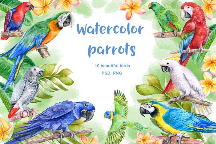 Watrcolor parrots