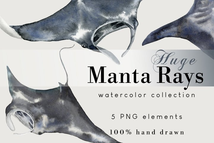 Manta Ray Watercolor PNG Clip Art