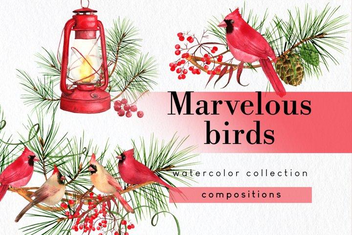 Vintage Christmas cardinal clipart watercolor compositions