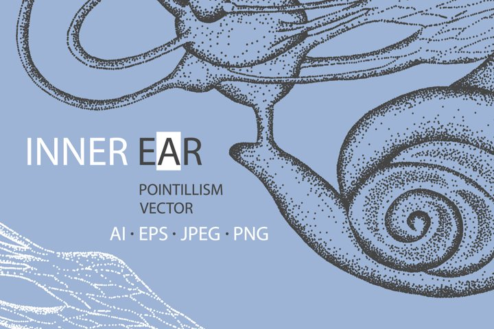 INNER EAR Vector Anatomy
