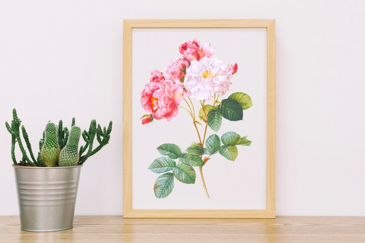 Light Pink Vintage Flowers, Botanical IlIustration, Vintage