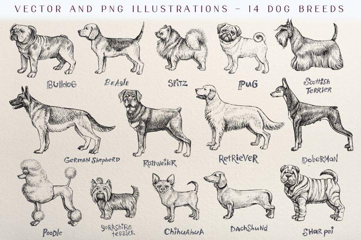 Dog breeds vintage vector sketch