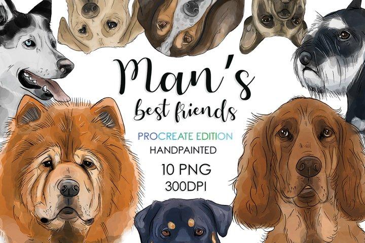 Dog Breeds, Dog Clipart, Sublimation Bundle, Dog Bundle