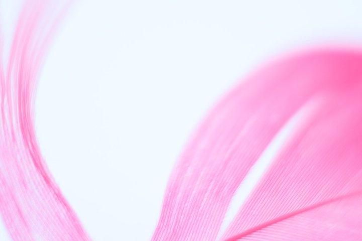 Abstract unfocused background with blurred pink feather.