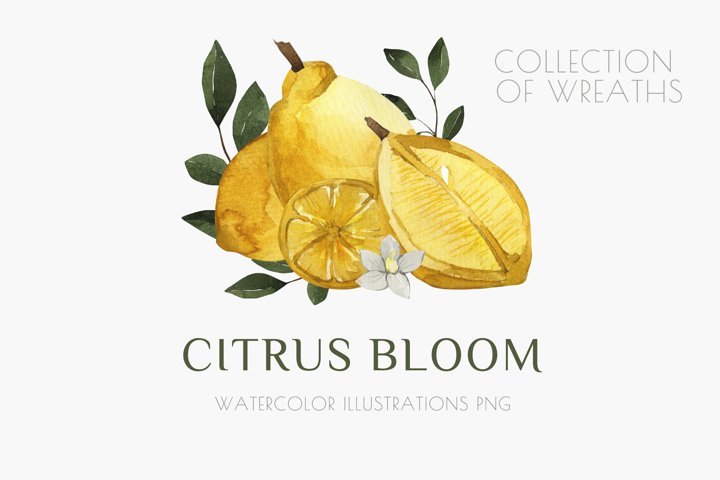 citrus blossom watercolor illustration png