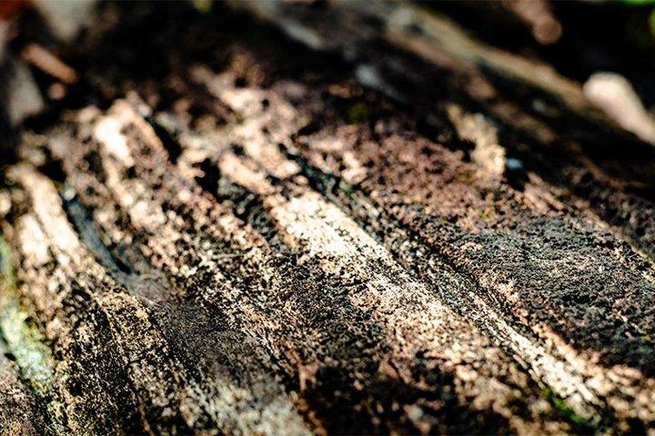 Tree bark close-up