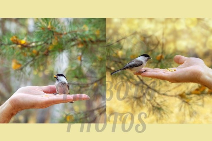 Little brave tit sits on hand at autumn time