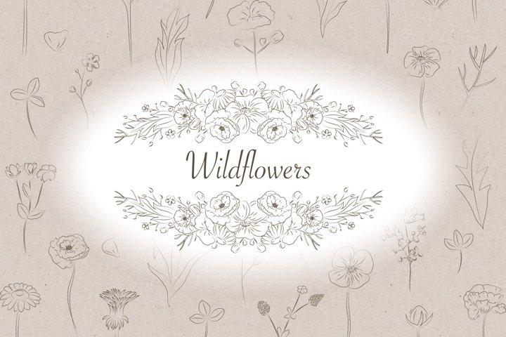 Wildflowers clip art / Line art illustrations / Flowers