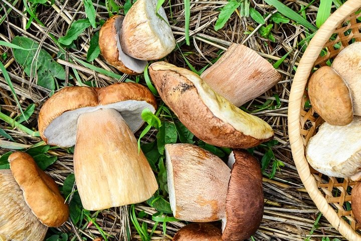 Mushrooms in forest grass