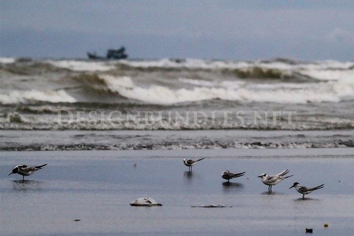 A group of seagulls on a sunny beach