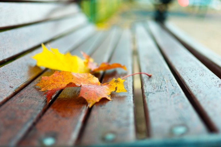 Autumn concept. Bench on which lies a yellow maple leaf.