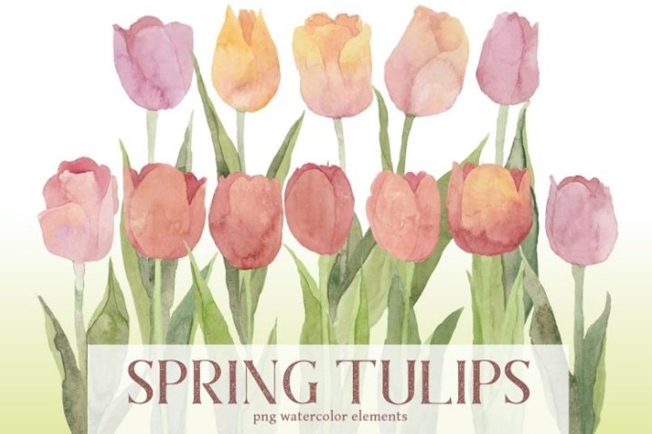 Pastel Spring Tulips Watercolor PNG Clipart