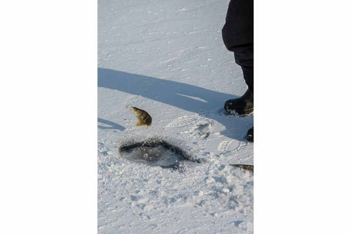 Ice fishing on lake on sunny frosty day. Perch on the hook